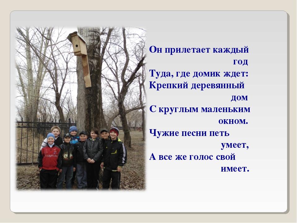 Он прилетает каждый год Туда, где домик ждет: Крепкий деревянный дом С круглы...