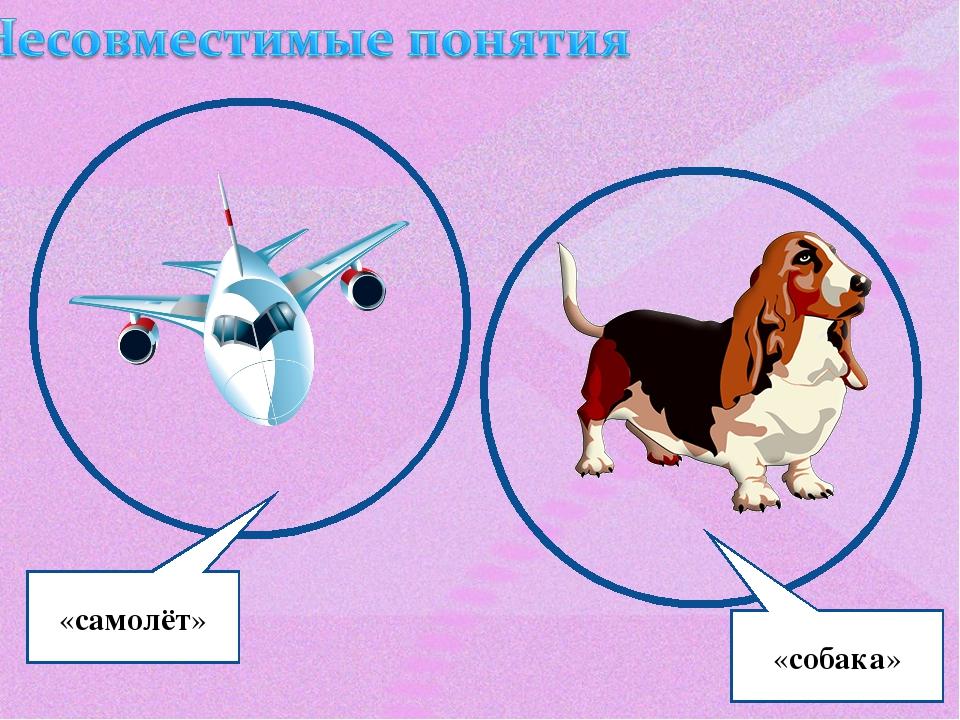 «самолёт» «собака»