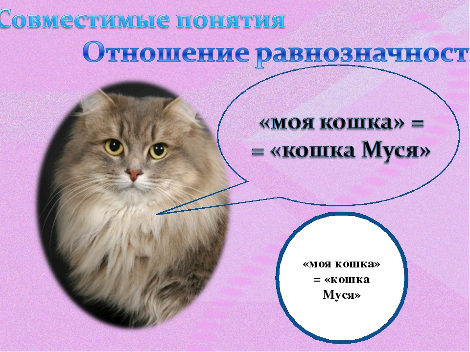 «моя кошка» = «кошка Муся»