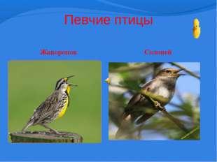 Певчие птицы Жаворонок Соловей