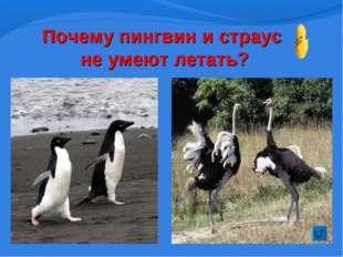 Почему пингвин и страус не умеют летать?