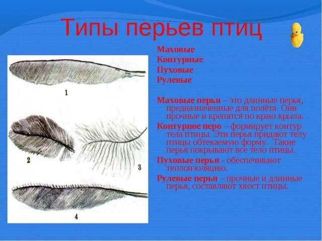Типы перьев птиц Маховые Контурные Пуховые Рулевые  Маховые перья – это длин...