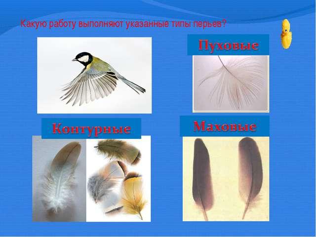 Какую работу выполняют указанные типы перьев?