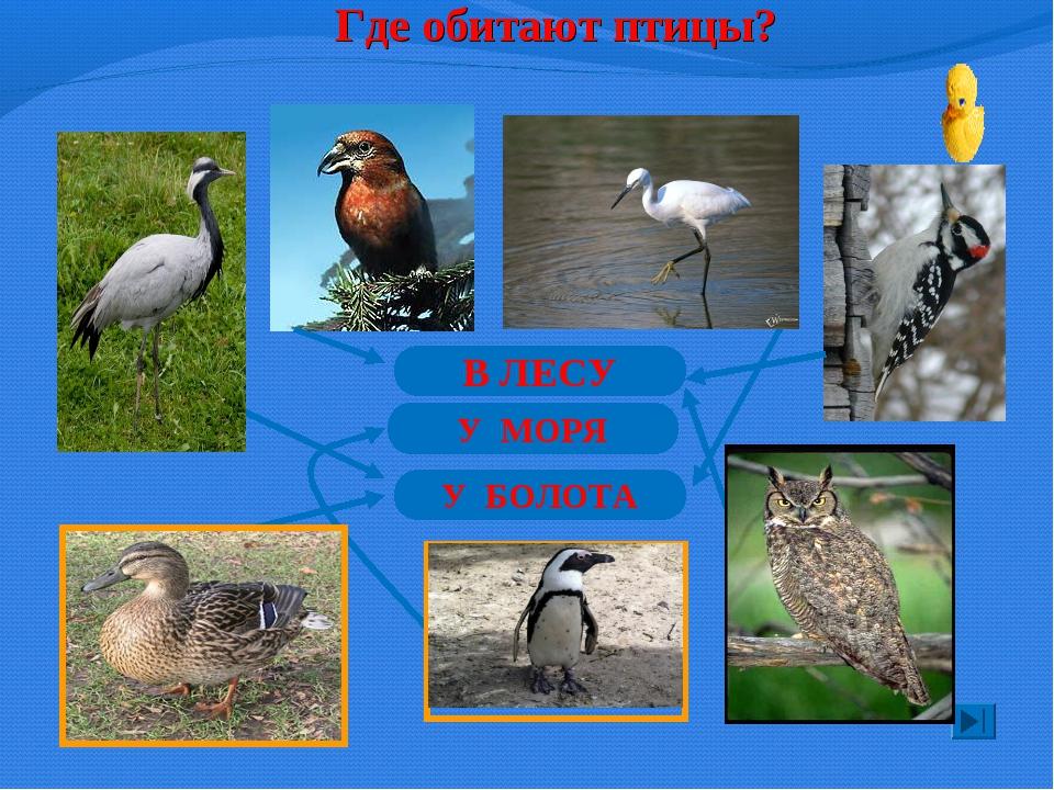 Где обитают птицы? В ЛЕСУ У МОРЯ У БОЛОТА