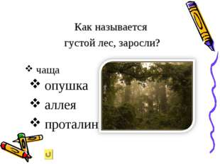 опушка аллея проталинка Как называется густой лес, заросли? чаща