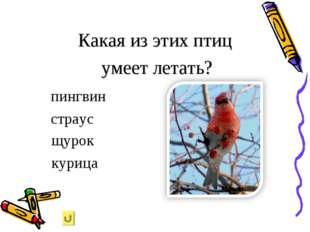 Какая из этих птиц умеет летать? пингвин страус щурок курица