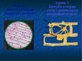 Задание 1. Зарисуйте в тетради увиденное в микроскоп