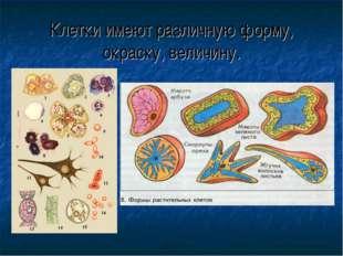 Клетки имеют различную форму, окраску, величину.