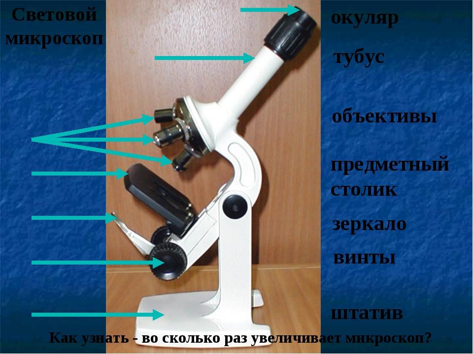 Световой микроскоп Как узнать - во сколько раз увеличивает микроскоп? окуляр...
