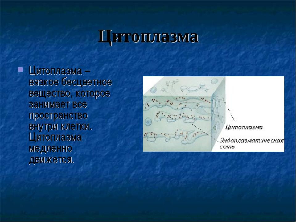 Цитоплазма Цитоплазма – вязкое бесцветное вещество, которое занимает все прос...