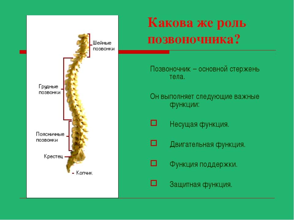 Какова же роль позвоночника? Позвоночник – основной стержень тела. Он выполня...