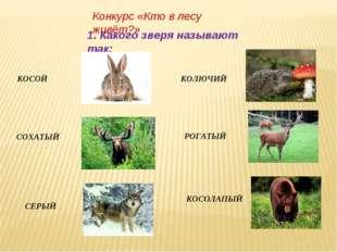 Конкурс «Кто в лесу живёт?» 1. Какого зверя называют так: КОСОЙ СОХАТЫЙ СЕРЫЙ