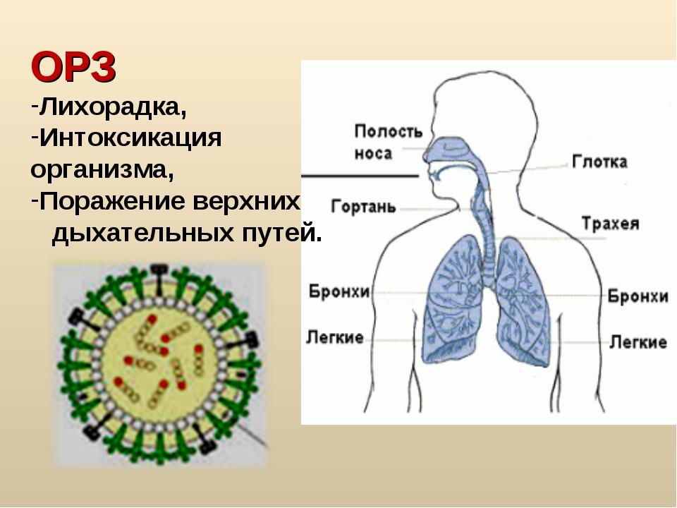 ОРЗ Лихорадка, Интоксикация организма, Поражение верхних дыхательных путей.