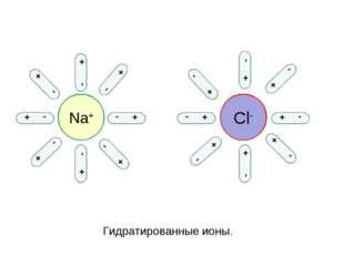 Na+ Cl- - + - + + - + - + - + - - + - + - + - + - + - + - + - + - + - + Гидра