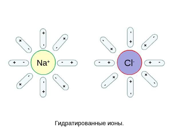 Na+ Cl- - + - + + - + - + - + - - + - + - + - + - + - + - + - + - + - + Гидра...
