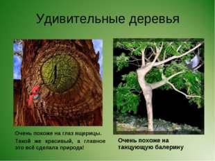 Удивительные деревья Очень похоже на глаз ящерицы. Такой же красивый, а главн