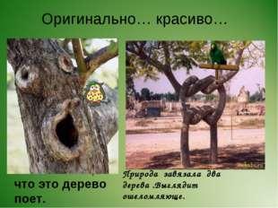 Оригинально… красиво… Мне кажется, что это дерево поет. Природа завязала два