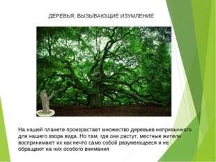 На нашей планете произрастает множество деревьев непривычного для нашего взо