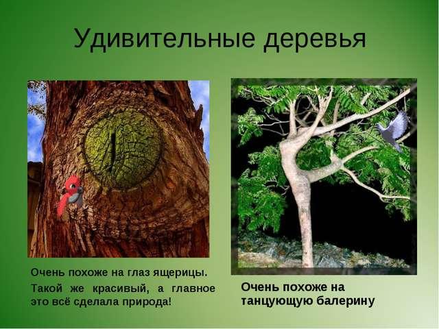Удивительные деревья Очень похоже на глаз ящерицы. Такой же красивый, а главн...