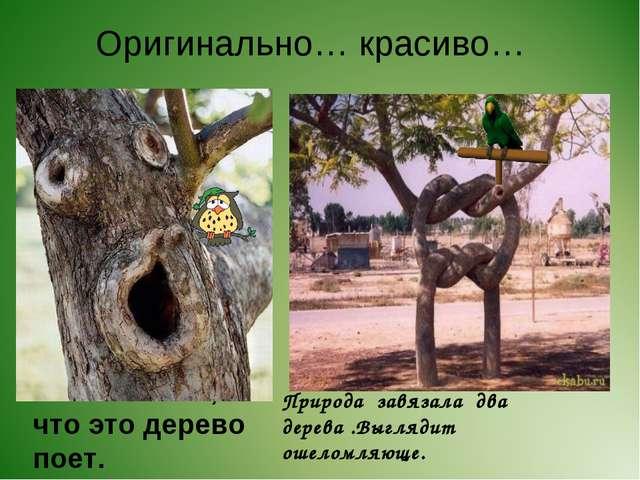 Оригинально… красиво… Мне кажется, что это дерево поет. Природа завязала два...