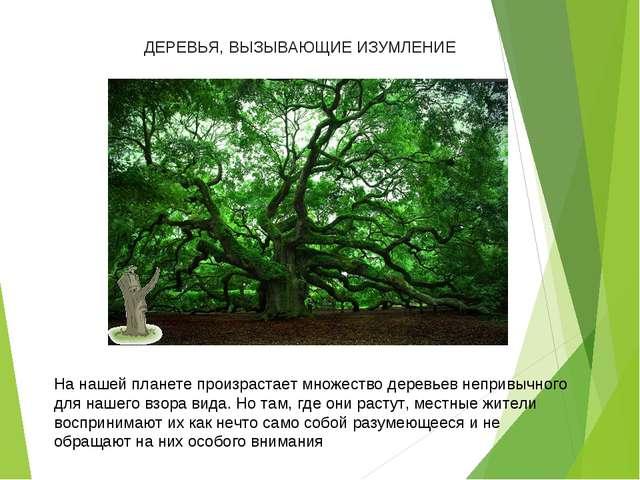На нашей планете произрастает множество деревьев непривычного для нашего взо...