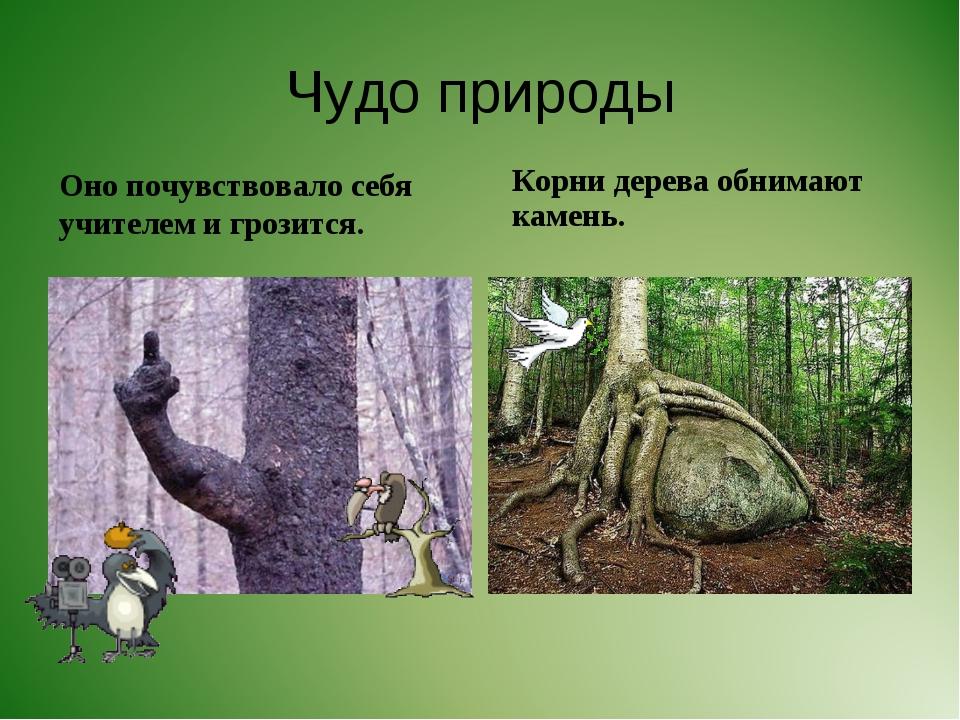Чудо природы Оно почувствовало себя учителем и грозится. Корни дерева обнимаю...
