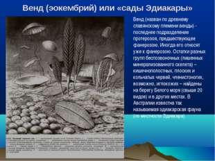 Венд (эокембрий) или «сады Эдиакары» Венд (назван по древнему славянскому пле