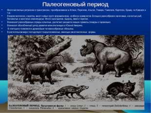 Палеогеновый период Многочисленные регрессии и трансгрессии, горообразование