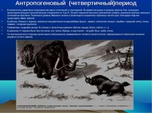 Антропогеновый (четвертичный)период В антропогене характерна неоднократная см