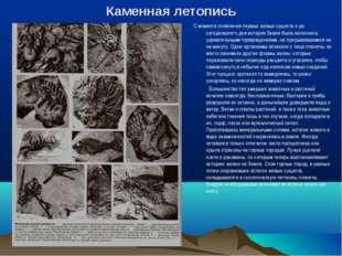 Каменная летопись С момента появления первых живых существ и до сегодняшнего