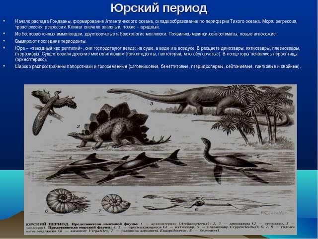 Юрский период Начало распада Гондваны, формирование Атлантического океана, ск...