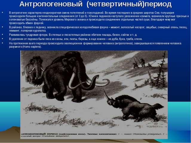 Антропогеновый (четвертичный)период В антропогене характерна неоднократная см...