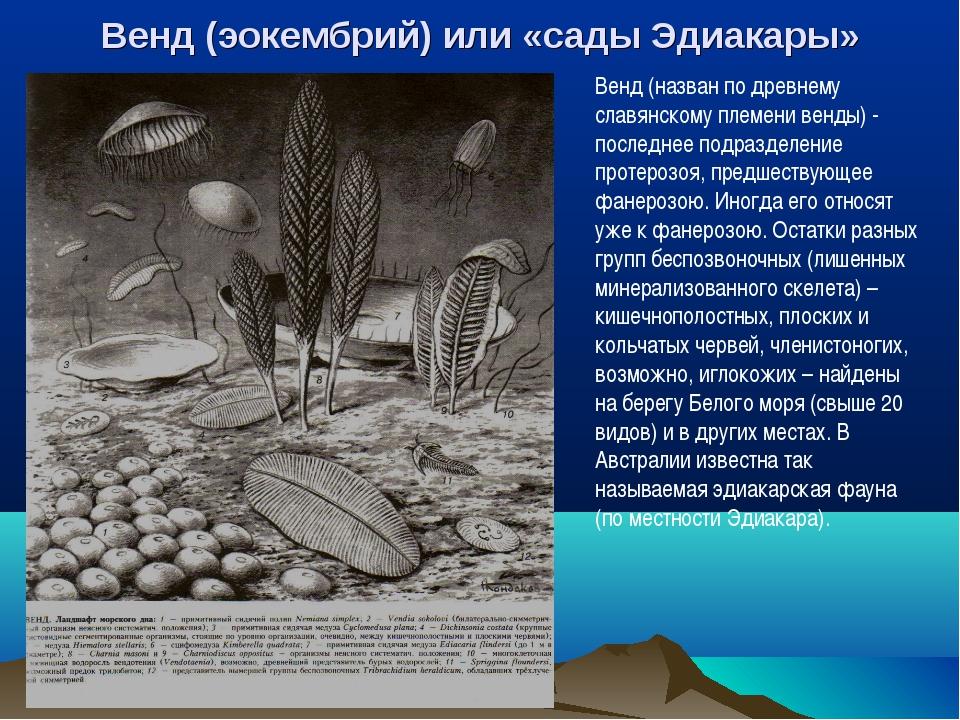 Венд (эокембрий) или «сады Эдиакары» Венд (назван по древнему славянскому пле...