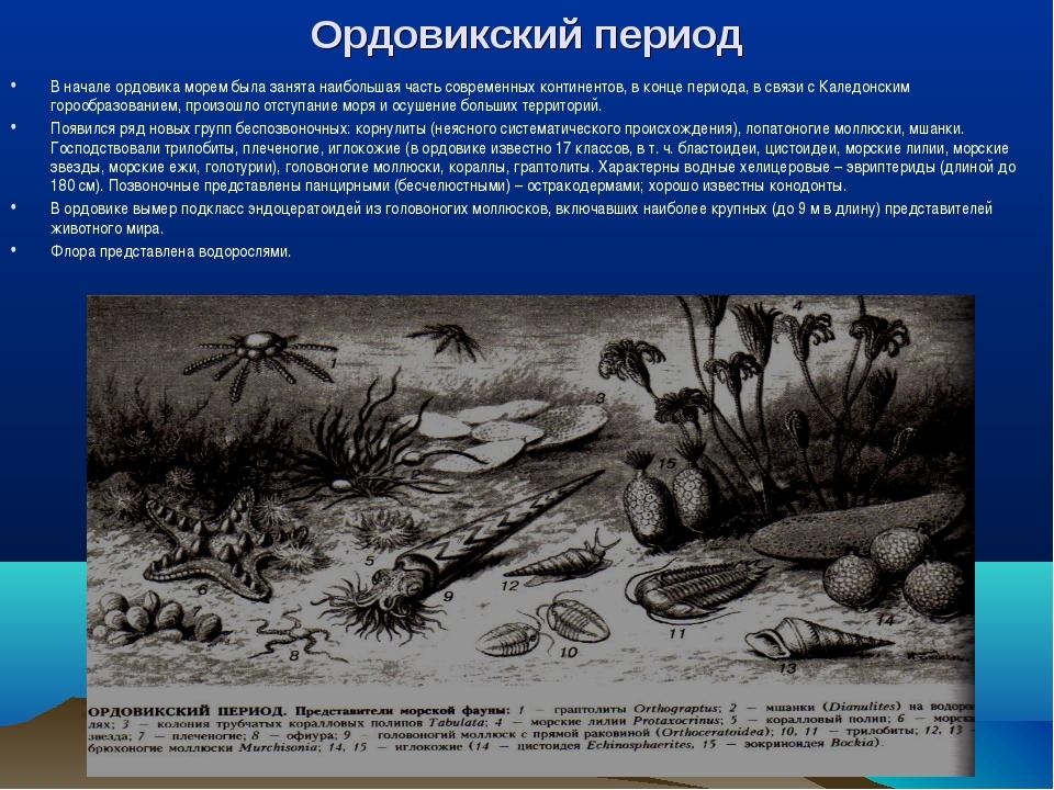 Ордовикский период В начале ордовика морем была занята наибольшая часть совре...