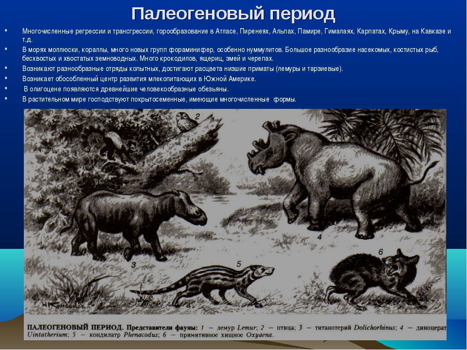 Палеогеновый период Многочисленные регрессии и трансгрессии, горообразование...
