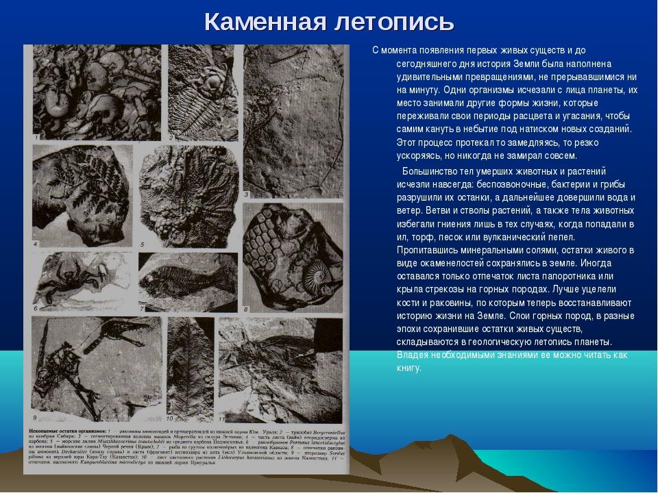 Каменная летопись С момента появления первых живых существ и до сегодняшнего...