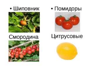 Смородина Шиповник Цитрусовые Помидоры