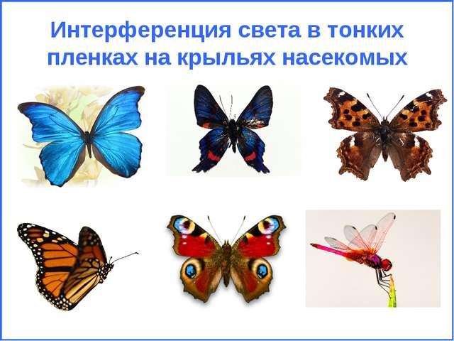 Интерференция света в тонких пленках на крыльях насекомых