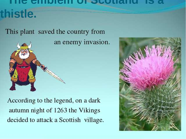 The emblem of Scotland is a thistle. This plant saved the country from an en...