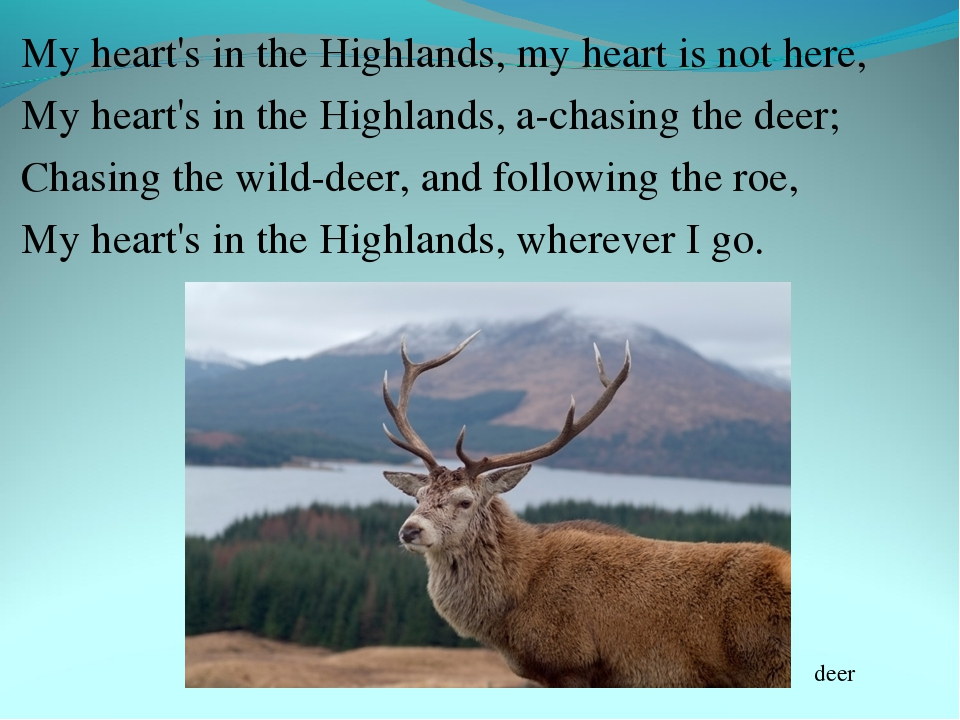 My heart's in the Highlands, my heart is not here, My heart's in the Highland...
