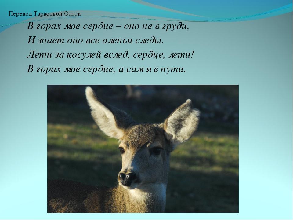 Перевод Тарасовой Ольги В горах мое сердце – оно не в груди, И знает оно все...