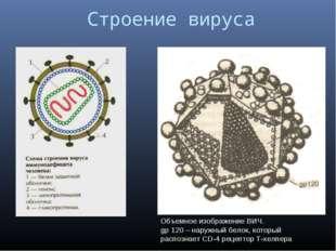 Строение вируса Объемное изображение ВИЧ. gp 120 – наружный белок, который р