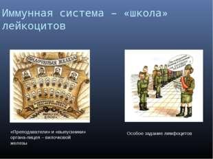 Иммунная система – «школа» лейкоцитов «Преподаватели» и «выпускники» органа-л