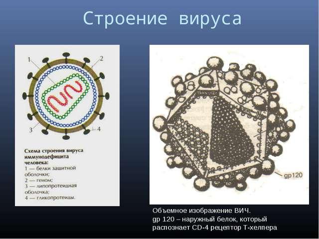 Строение вируса Объемное изображение ВИЧ. gp 120 – наружный белок, который р...