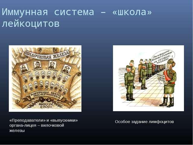Иммунная система – «школа» лейкоцитов «Преподаватели» и «выпускники» органа-л...