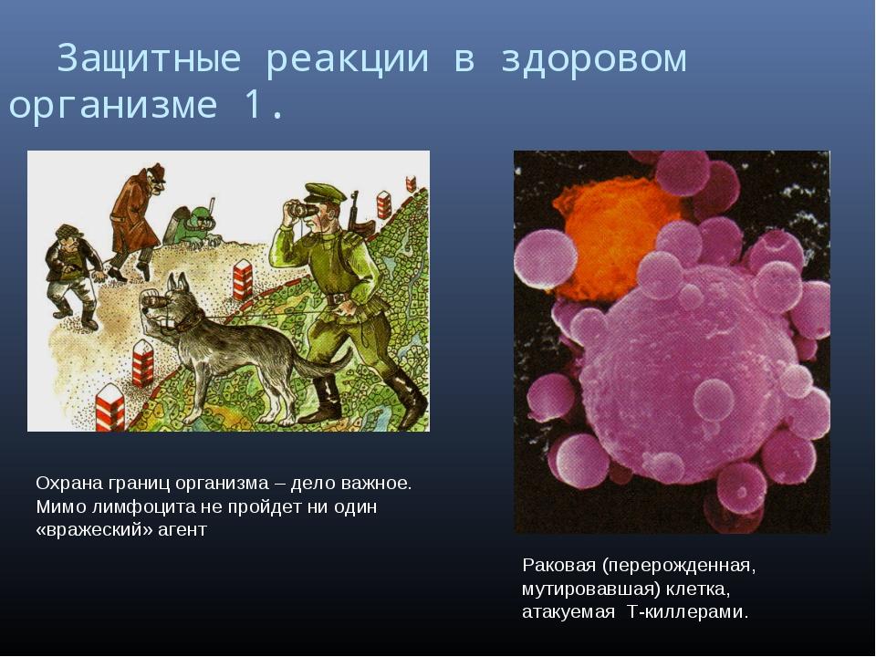 Защитные реакции в здоровом организме 1. Охрана границ организма – дело важн...
