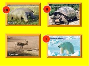 Джейран Носорог Слоновая черепаха Белый медведь I II III