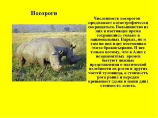 Численность носорогов продолжает катастрофически сокращаться. Большинство из