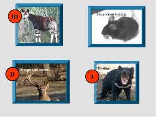 Окапи Этрусская мышь Бухарский олень Вомбат I II III