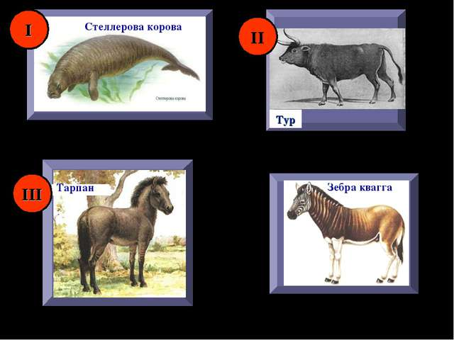 Зебра квагга Тарпан Тур Стеллерова корова I II III